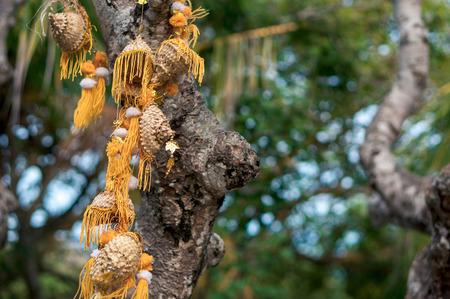 Tree trunck decorated with yellow oriental garland in Uluwatu temple, Bali, Indonesia