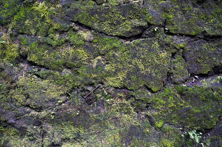 Moss-grown cracked rocky wall. Natural background. Фото со стока