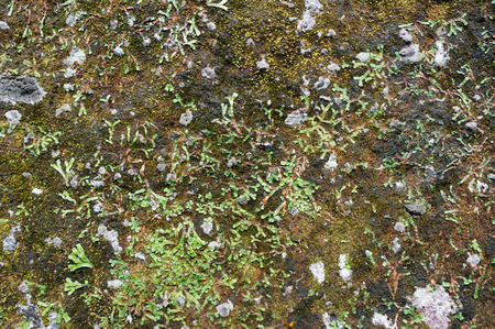 Old stone wall with moss and linchen