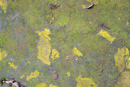 The pattern of asphalt road with cracks, green lichen and yellow spots