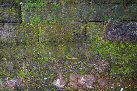 Fragment of old brick wall with moss