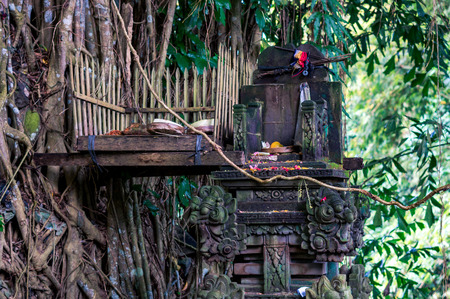 Sacred altar with gifts for balinese gods twined by lianas of holy banyan tree, Bali, Indonesia
