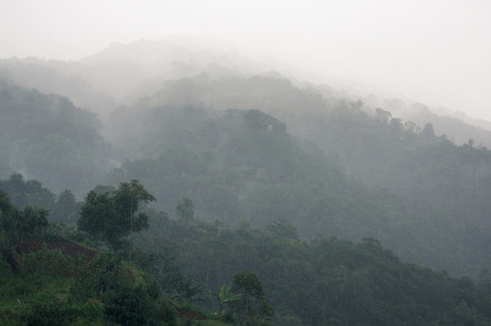 View of hills covered with tropical forest and fog in the rain, Bali, Indonesia
