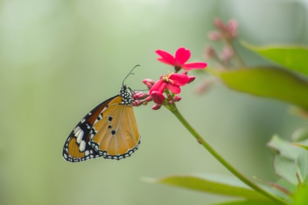 green nature: Orange butterfly on red flower with green nature background