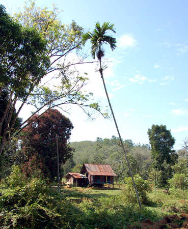 malay village: Malayo tradicional casa de pueblo  Foto de archivo