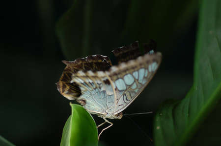 loveable: Butterfly resting on leave with dark background Stock Photo