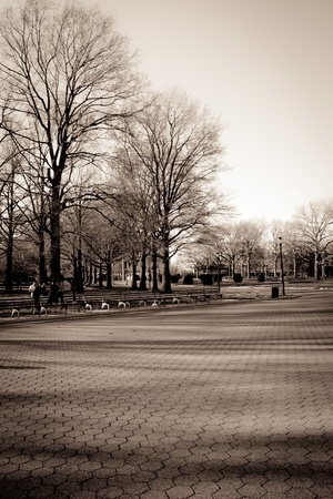 duo tone: Duo tone  of Flushing meadow park. Included are trees, benches and paved walkway. Stock Photo