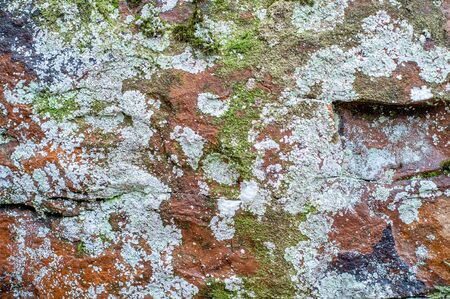 Rock face with multi-colored moss and patina.