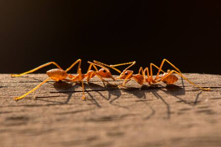 Two ant macro photography