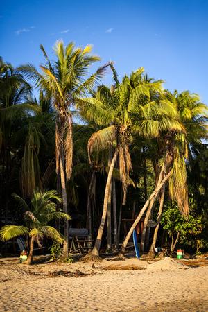 Palm trees and sand beach on the Samara beach Stock Photo