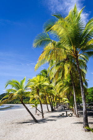 Two rows of palm trees on the Carrillo beach, Guanacaste, Costa Rica Stock Photo