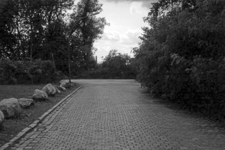 Black and white analog photography of a cobblestone pavement through a park against a cloudy sky behind a row of trees.