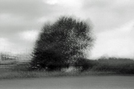 Blurred black and white analogue exposure of trees in a park.