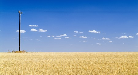 April 2006 - Wheat fields in rural Victoria, not far from Swan Hill. Stock Photo - 6949721