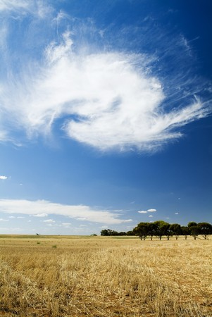 coeliac: January 2006 - Wheat fields and cloud formations in rural Victoria, not far from Swan Hill.