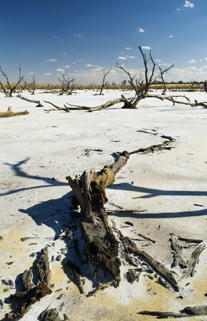 hotter: Dead tree trunks and limbs on a white salt lake under blue sky