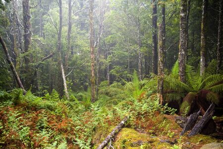 wilds: Incredibly spectacular views and details abound on the little known route through the Mt Victoria Forest Reserve, northeastern Tasmania.