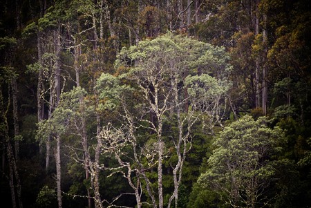 abound: Incredibly spectacular views and details abound on the little known route through the Mt Victoria Forest Reserve, northeastern Tasmania.