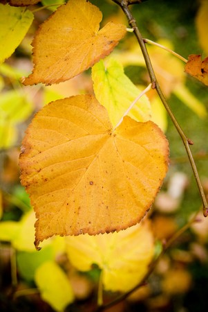 yellowing: Yellowing leaves in detail