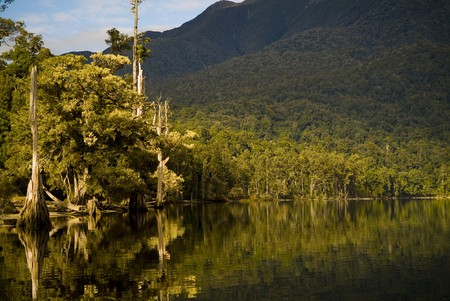 Forest reflections on lake edge Stock Photo - 6950373