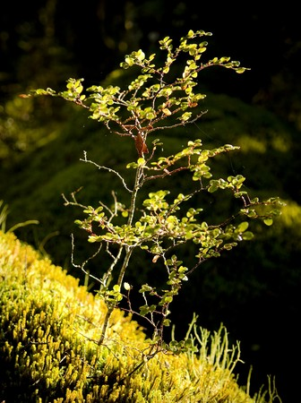 wilds: Plant detail in a dense and ancient forest