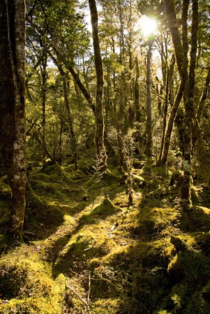 Dense and ancient forests Stock Photo - 6950189