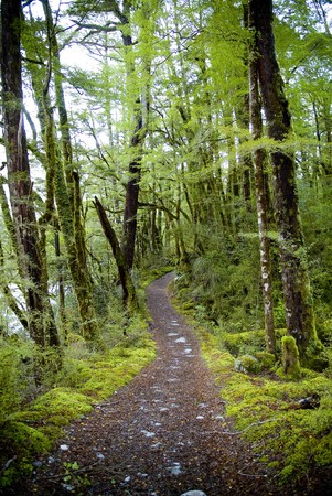 Lush jungle trail with dirt pathway photo