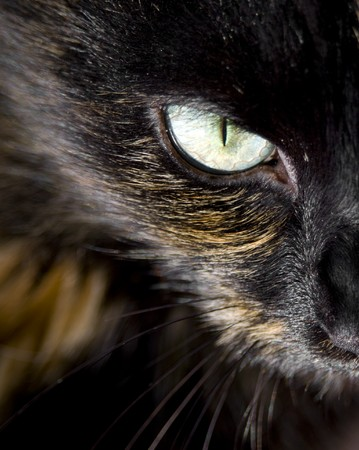 Close up of cat's eye staring at you Imagens