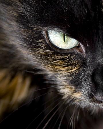 yellow eyes: Close up of cats eye staring at you