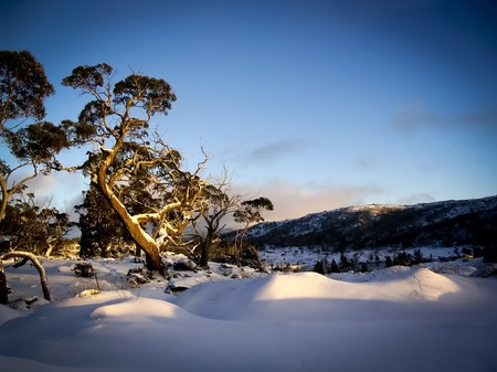snow on the ground: Pure white snow covers the ground on the Overland Track in Tasmania, Australia.