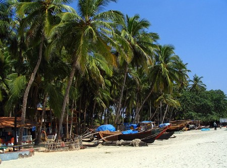 Tropical palm trees and fishing boats in Goa, India Stock Photo - 8024662