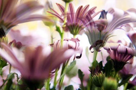vibrant colours: Beautiful background of daisy blurs in vibrant colours Stock Photo