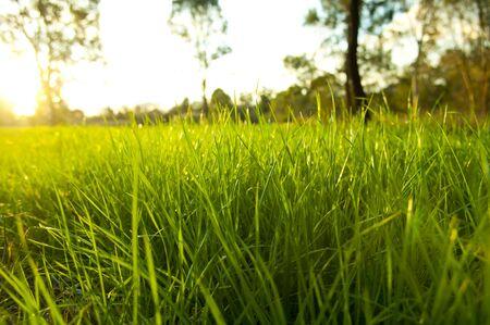levels: Getting oog hoogte op weelderige groene gras met de felle zon achter