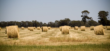Harvest time nearly finished, hay bales sit in the fields waiting to be picked up Stock Photo - 8024707