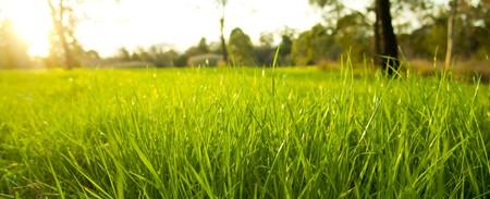 後ろに明るい太陽の下で緑豊かな緑の草に目の高さを取得