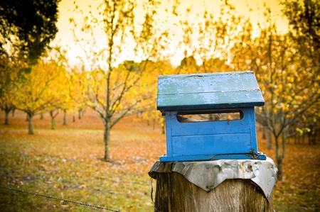 A rustic blue letterbox with a bright orange orchard behind it  Stock Photo - 8437675