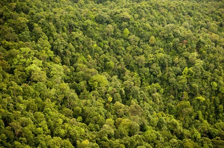 Aerial view of the forest  jungle canopy photo
