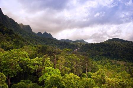 Spectacular jungle landscape with mountain range photo