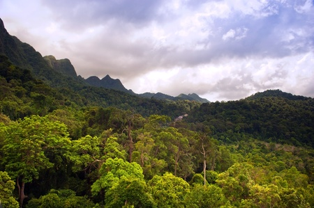geoforest: Spectacular jungle landscape with mountain range
