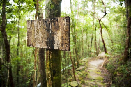 Blank sign post in the jungle with a trail Stock Photo