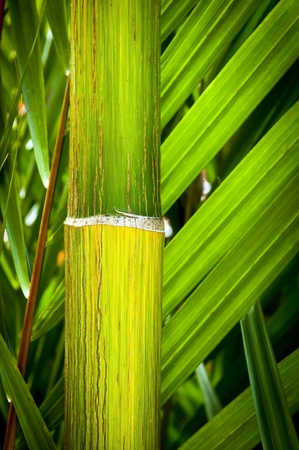 Close up details of tropical palm and bamboo Stock Photo