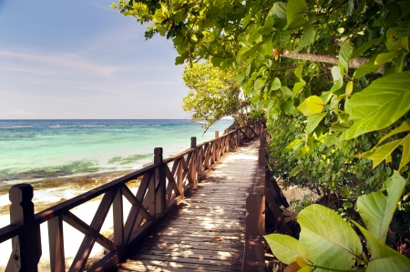 tourist resort: Walkway through beautiful trees on a tropical island