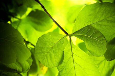 langkawi island: Shallow focused leaves in rich greens and yellows