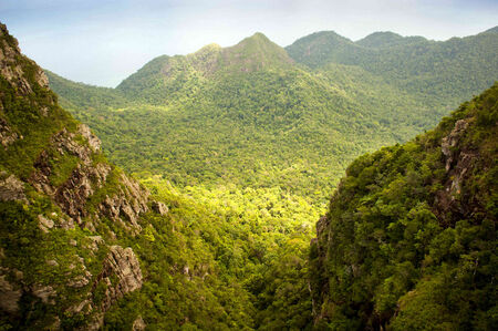 tree canopy: Spectacular jungle landscape with mountain range