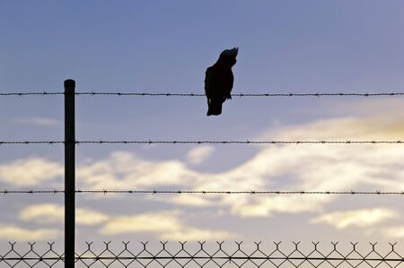 Bird silhouetted on a wire against a blue sunset sky photo