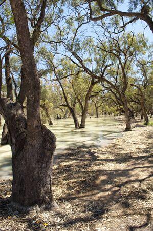 sequias: Río Darling, en el interior de Australia es una de las más grandes del país Foto de archivo
