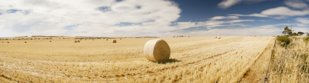 Harvest time with hay bales in the summer sun photo
