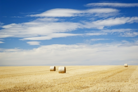 Harvest time with hay bales in the summer sun Stock Photo - 17233899
