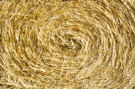 Bales of hay in the fields in summer time harvest Stock Photo - 17233938