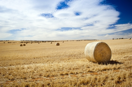 Harvest time with hay bales in the summer sun Stock Photo - 17328008